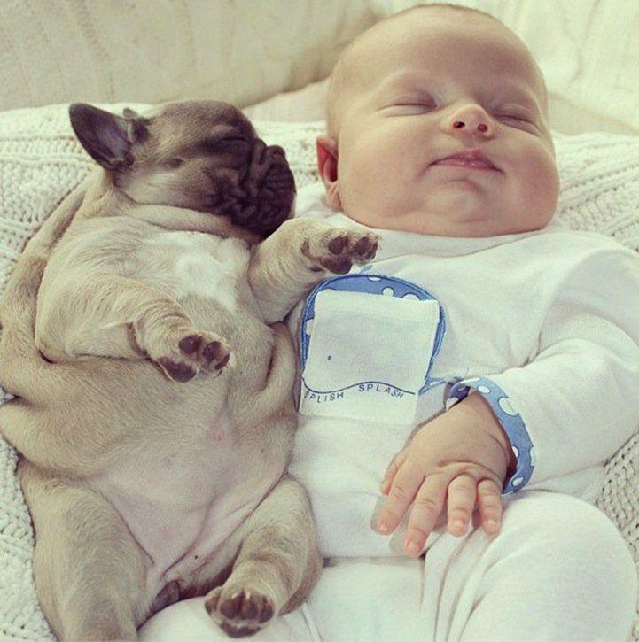 Baby is sleeping with Bulldog Puppies