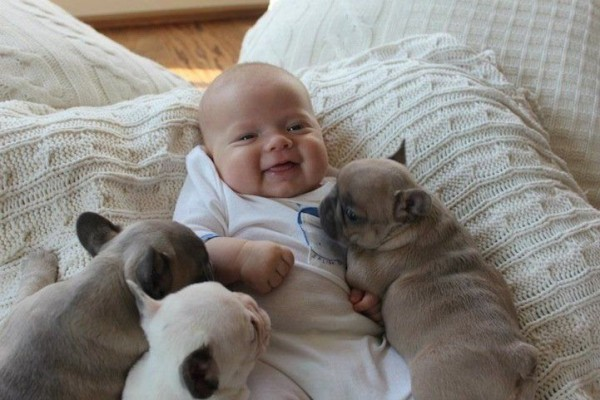 Baby is sleeping with Bulldog Puppies