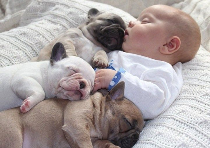 Baby Cuddles Up with Bulldog Puppies
