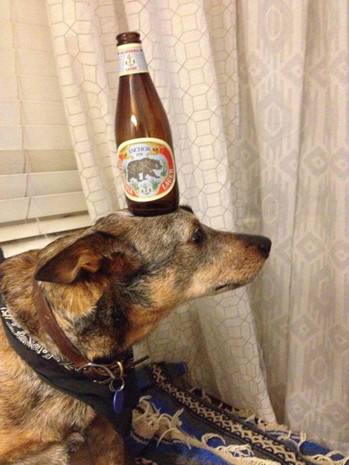 Bottle on the Head of Jack Dog