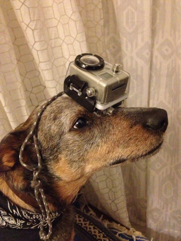 Camera on the Head of Jack Dog