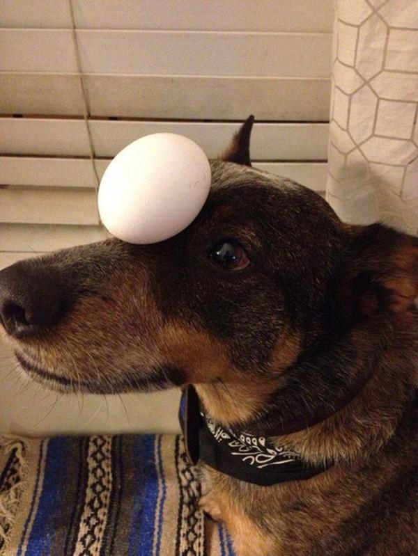 Egg on the Head of Jack Dog