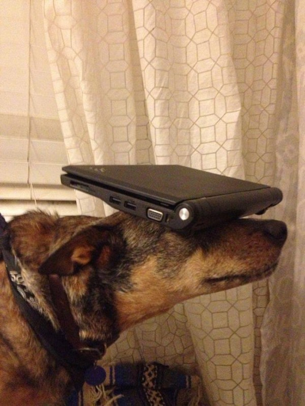 Laptop on the Head of Jack