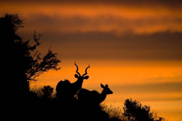 Silhouettes of Photographer Mario Moreno