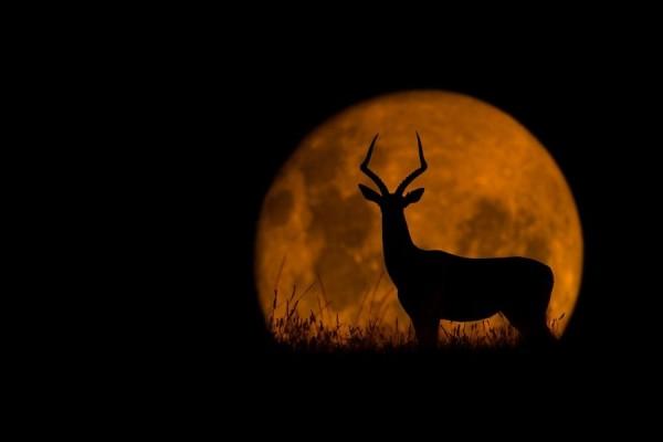 Inspirational Evening Photography