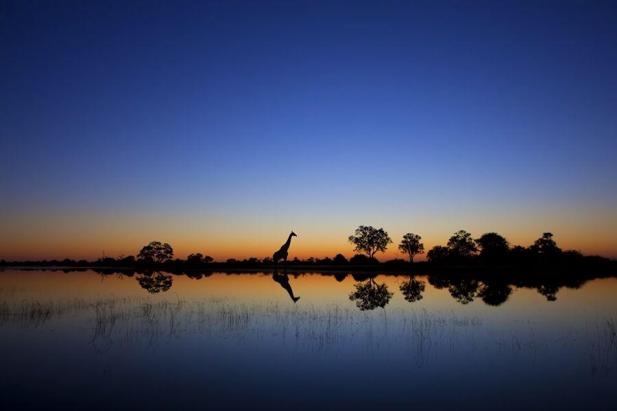 Spectacular Wildlife Silhouettes by Mario Moreno