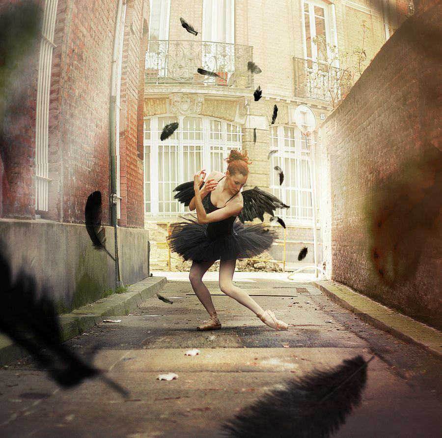 The black swan parade