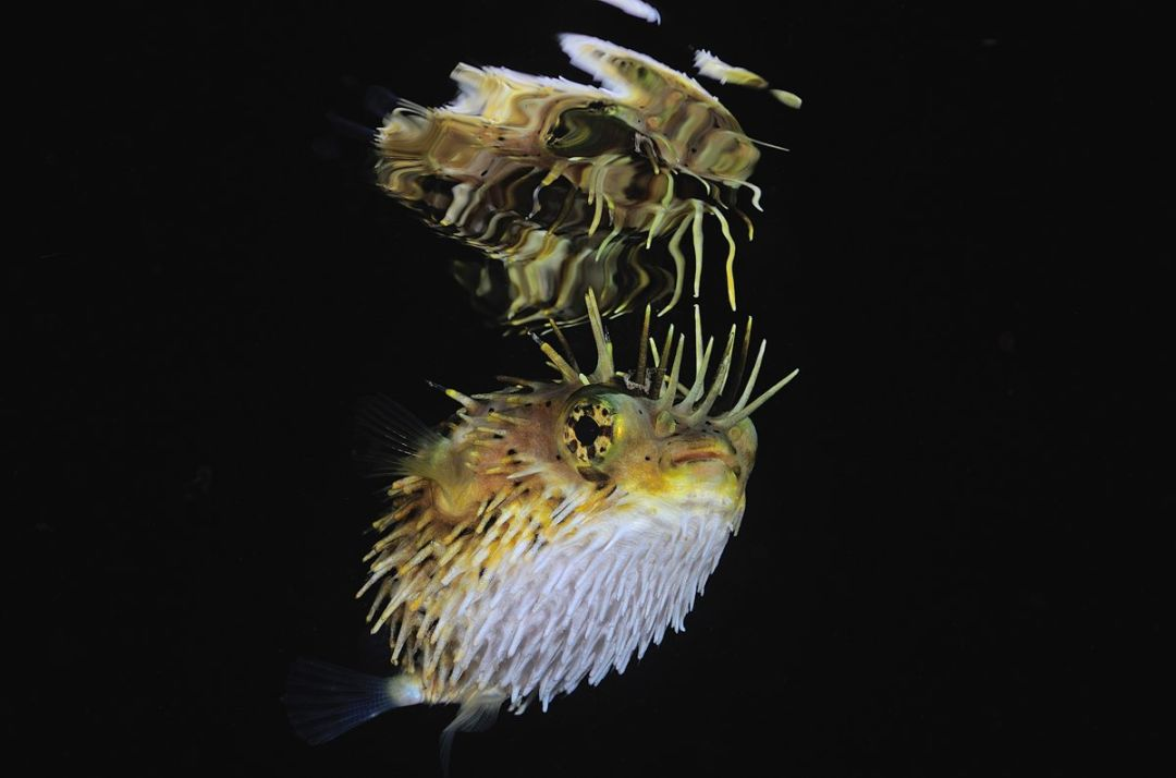 Underwater Photos by Andrew Shpatak
