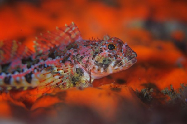Underwater Photos by Andrey Shpatak