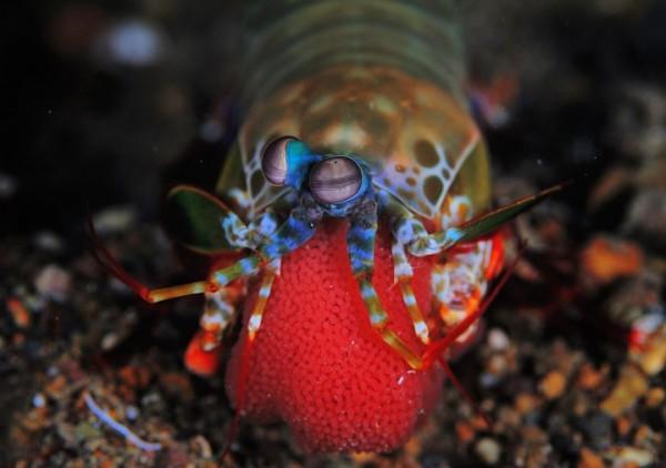 Underwater Inhabitants