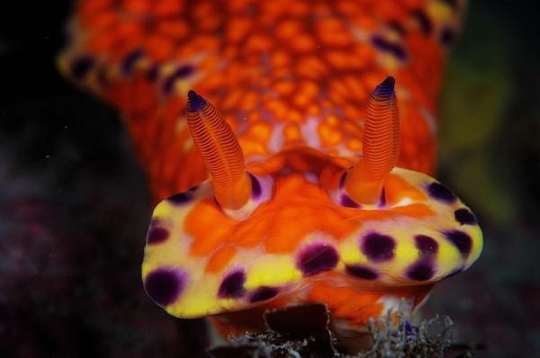 Wonderful Underwater Photography