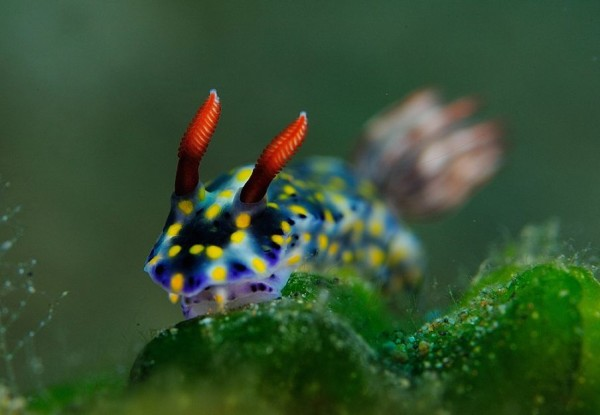 Incredible Underwater Photography by Andrey Shpatak