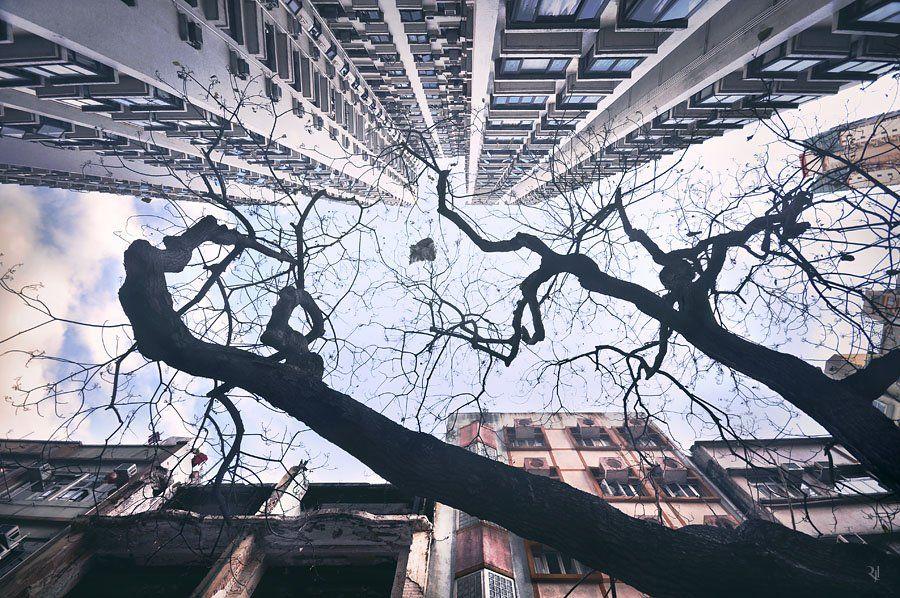 """Romain Jacquet-Lagreze """"Vertical Horizons"""" Photographs"""