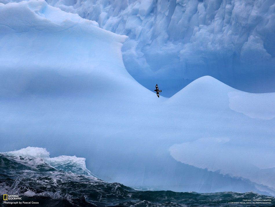 Sea and icebergs, South Georgia. (Pascal Cocco)