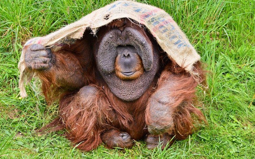 Animals At Durrell Wildlife Conservation Park