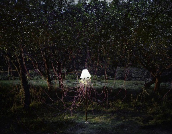 Apple Trees and LEDs 2011