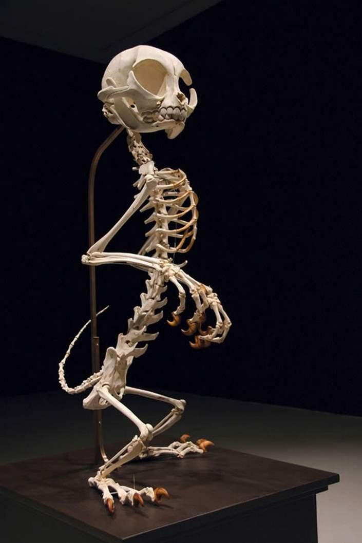 Cartoon Skeletons Art