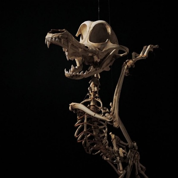 Cartoon Skeletons by Hyungkoo Lee