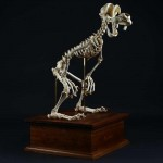 Incredible Cartoon Skeleton Art by Hyungkoo Lee