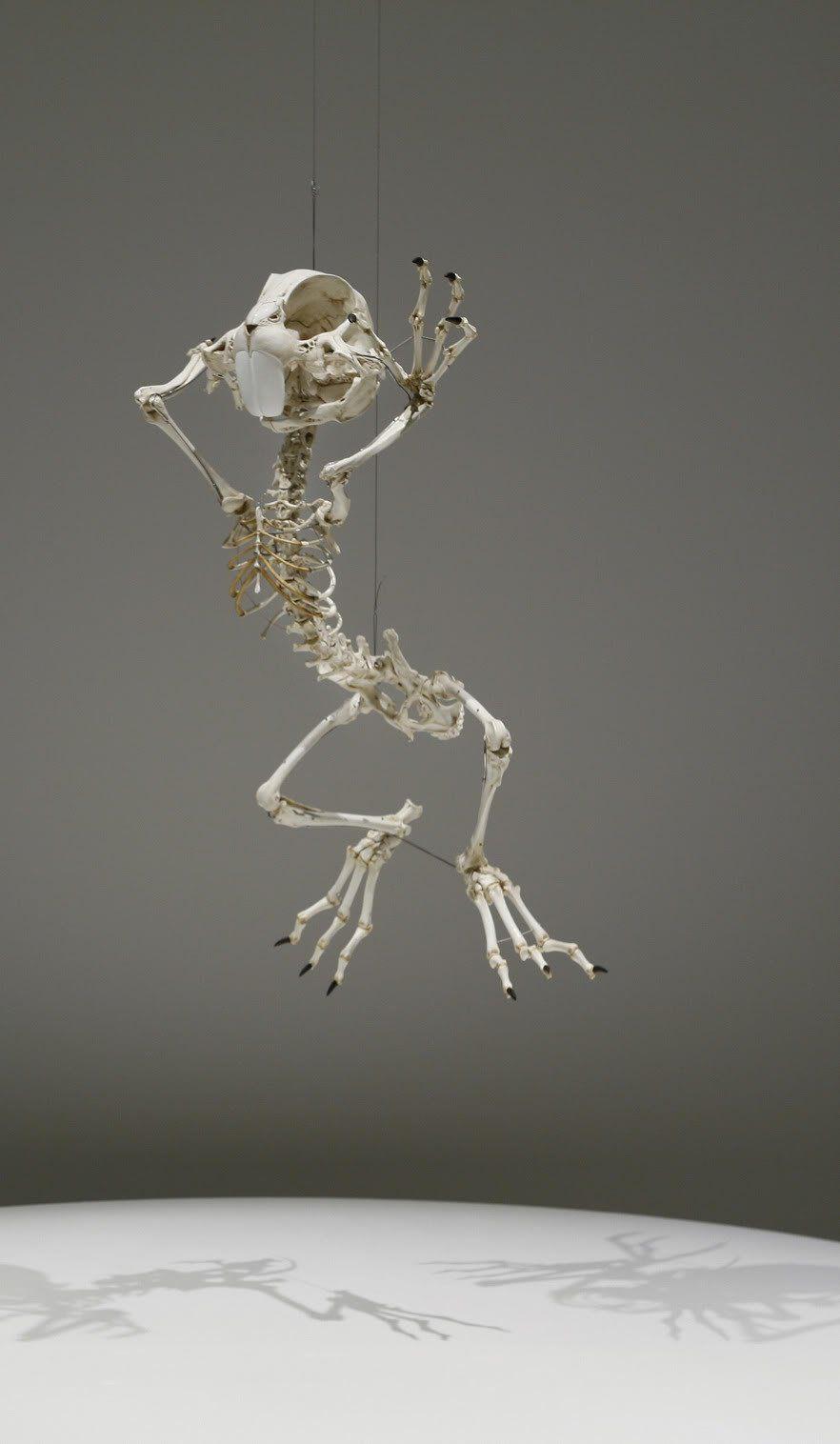 Homo Animatus Project by Hyungkoo Lee