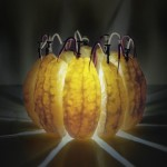 Back to Light Project – Caleb Charland Turns Fruit into Light