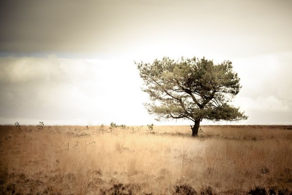 Solitude 2