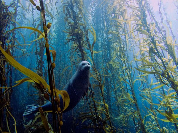 1. Harbor seal by Kyle McBurnie, California