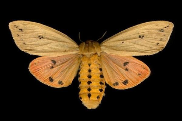 Exotic Butterflies in Photos Jim des Rivieres