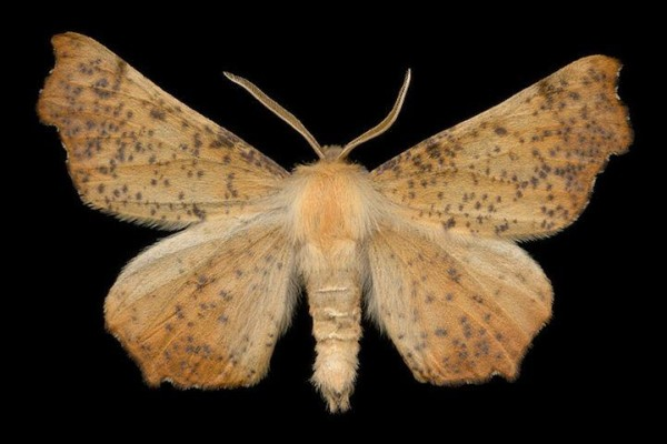 A Showcase of Exotic Moths in Photos of Jim des Rivieres