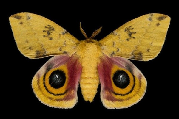 Exotic Moths by Jim des Rivieres