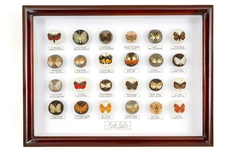 Incredible Insects Art
