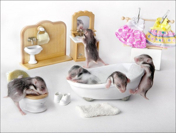 Rodents Photography by Elena Eremina