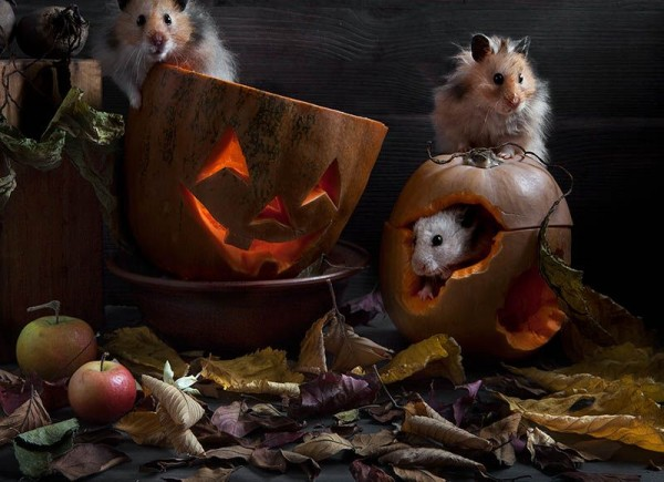 Still Life with Hamsters by Elena Eremina