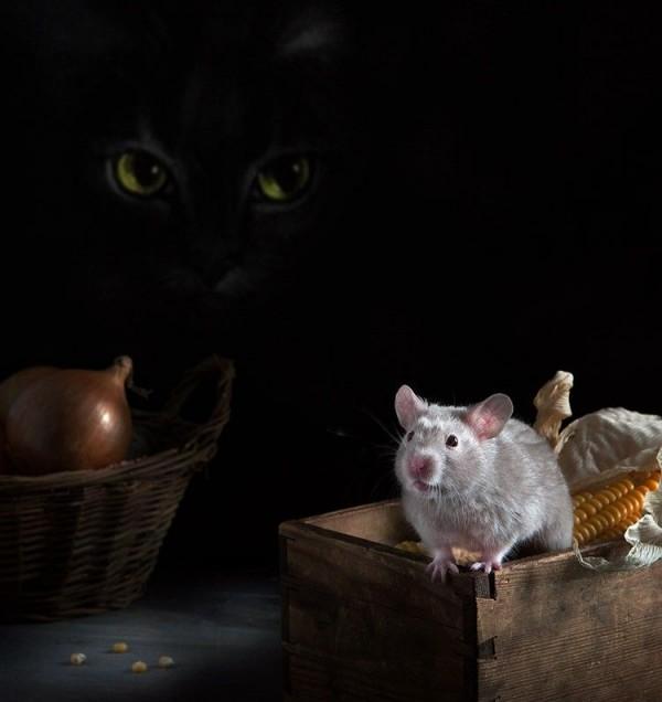 Still Life with Hamsters by Elena Eremina