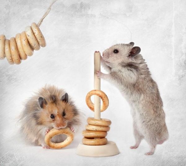 Rodents Photography by Elena Eremina