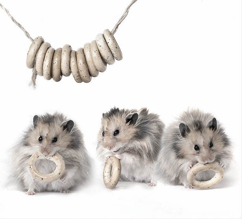 Hamsters by Elena Eremina