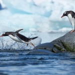 Astounding Penguins Photography