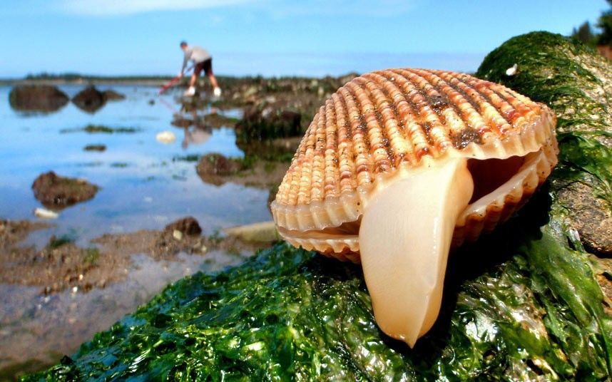 Clam seems to indicate the language while being photographed