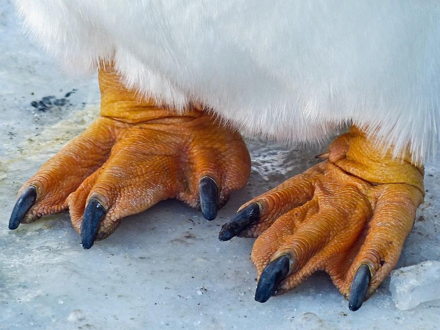 Paws are all shades of orange