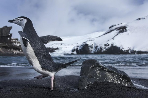 Penguins dive to a depth of two hundred meters