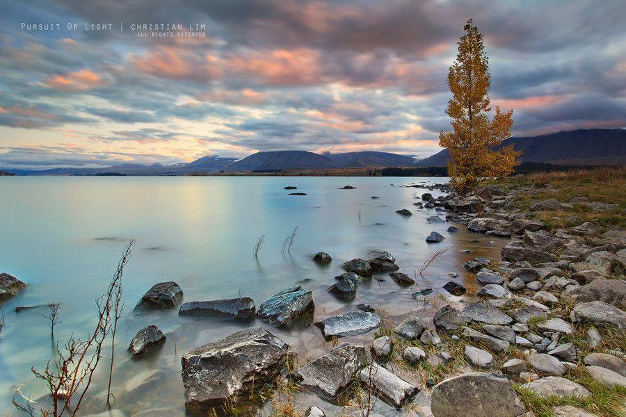 An Autumn Tree by Christian Lim