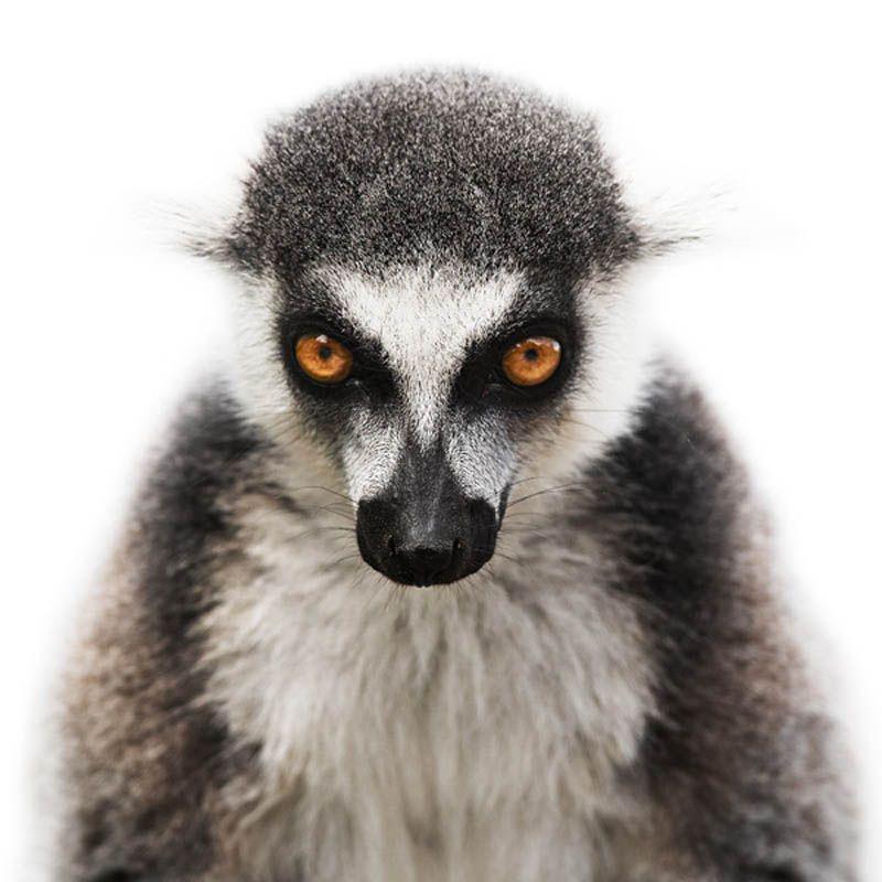 Animal Portrait by Morten Koldby (1)