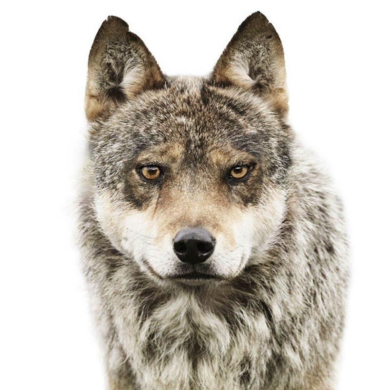Animal Portrait by Morten Koldby