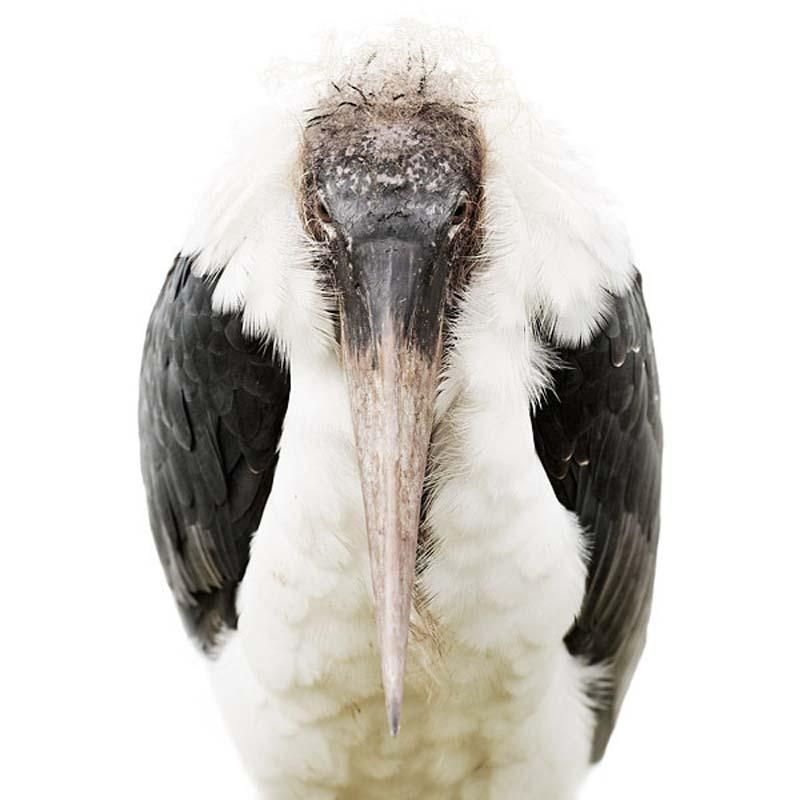 Bird Portraits by Morten Koldby