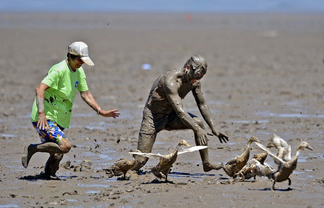 Competitions on catching ducks in the festival sea mud