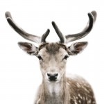 Incredibly Amazing Face Portraits of Animals by Morten Koldby