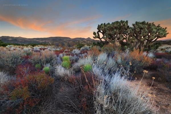 Desert Hue by Christian Lim