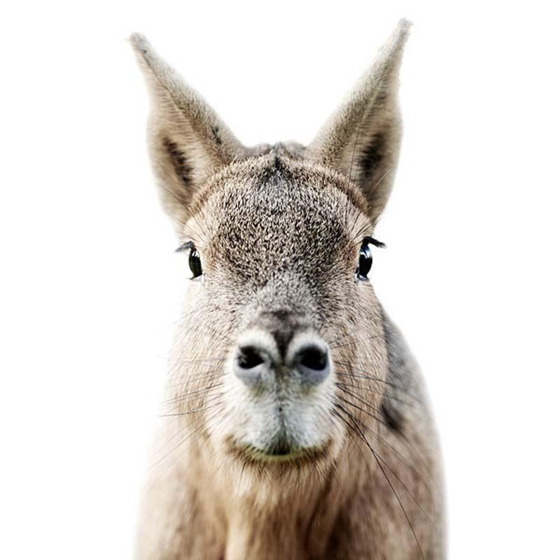 Donkey Portraits by Morten Koldby