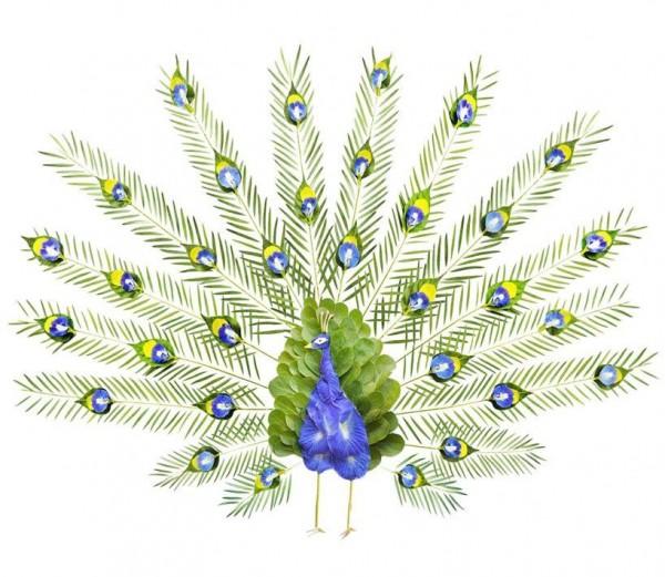 Birds Made out of Flower Petals