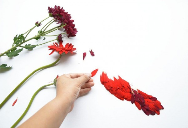Exotic Birds Created with Flower Petals